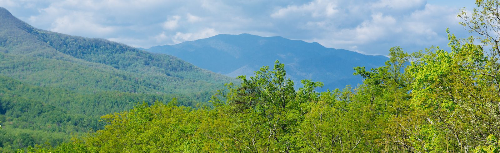 Top 5 Smoky Mountain Hikes You Have to Try