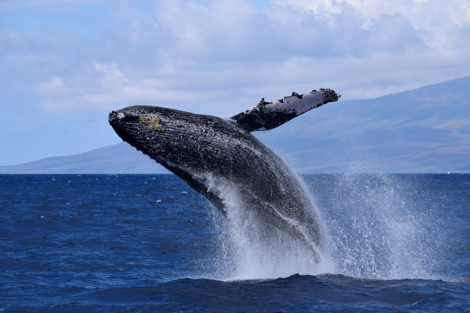 Most Popular Hawaiian Wildlife You Might See While in Oahu