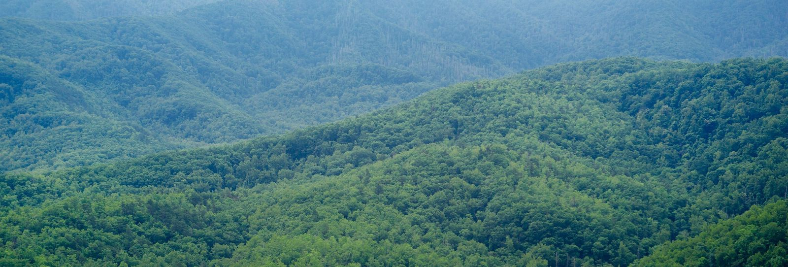 Top 4 Reasons Why Our Ziplines Offer the Best Views in the Smoky Mountains